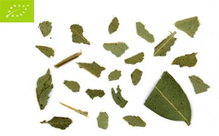 ~Ευκάλυπτος, Eucalyptus globulus, bio~