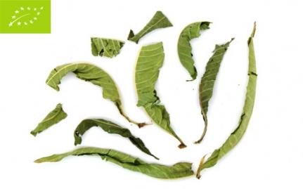 Λουίζα, Lippia citriodora, bio