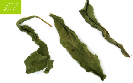 Ταραξάκο, Taraxacum officinale, bio