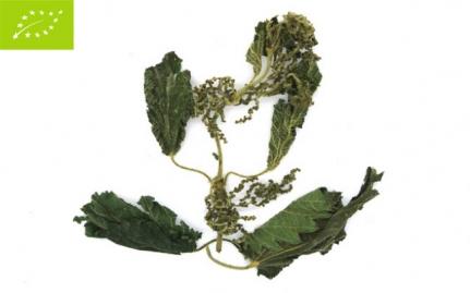 Τσουκνίδα, Urtica dioica, bio